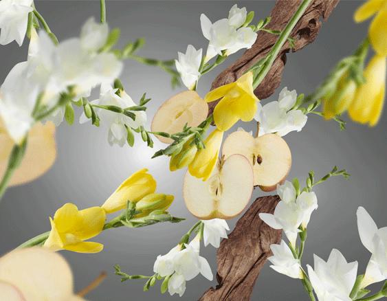 Anti-Odeur d'Animaux - Fruité & Fleuri