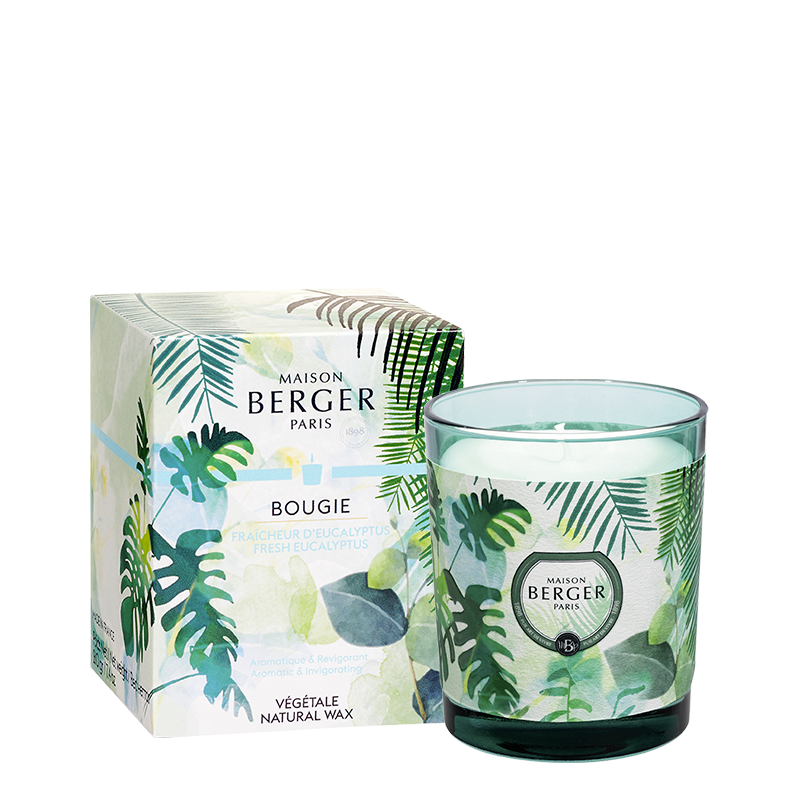 Bougie parfumée Fraîcheur d'Eucalyptus